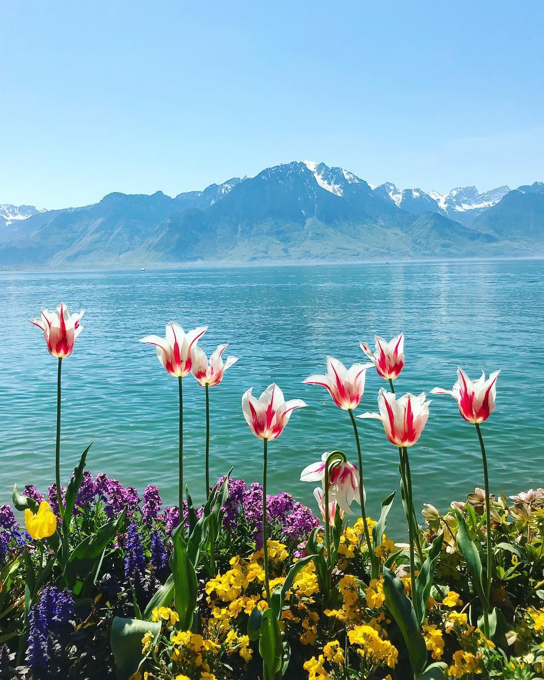 Montreux spring